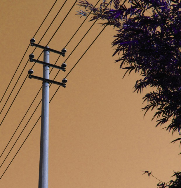 大树与电线杆如此亲密挺危险