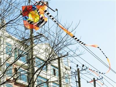 电线两侧300米内放风筝者最高罚1万