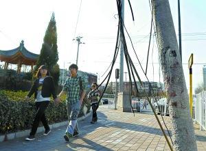 树上垂断线是电线吗? 路上行人吓一跳