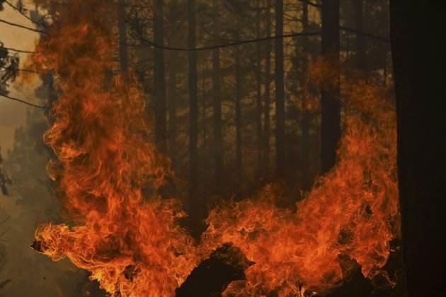 """美国北加州山火已致21人死亡 电线或为""""导火线"""""""