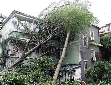 13级大风突袭广州长洲岛 电线杆被吹断